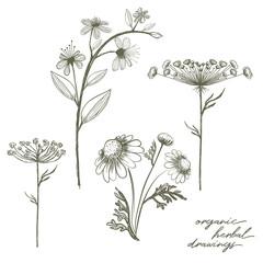 Organic herbal elements