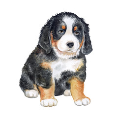 Bernese Mountain Dog. Puppy isolated on white background. Watercolor. Illustration. Template. Clip-Аrt
