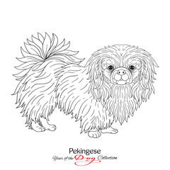Pekingese. Black and white graphic drawing of a dog.