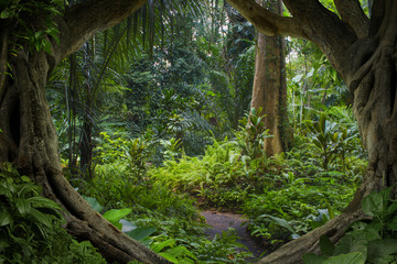 Poster de jardin Jungle Asian jungle