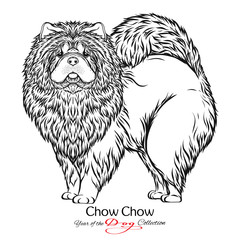 Chow Chow. Black and white graphic drawing of a dog.