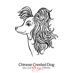 Chinese Crested Dog. Black and white graphic drawing of a dog.