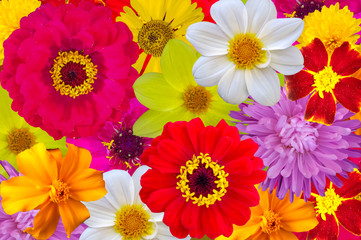 Mix of bright large flowers, background.