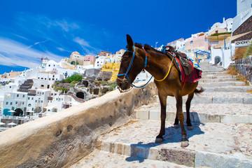 Foto op Plexiglas Ezel Donkey taxis in Santorini, Greece