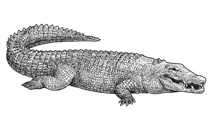 Saltwater crocodile illustration, drawing, engraving, ink, line art, vector