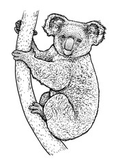 Koala illustration, drawing, engraving, ink, line art, vector