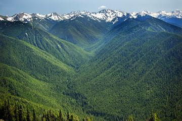 Green Valleys Evergreens Snow Mountains Hurricane Ridge Olympic National Park Washington