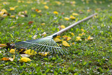 the rake laid in the grass