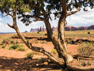 Totem Pole, old tree, Monument Valley - Arizona, AZ, USA