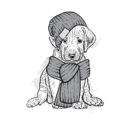 A beautiful dog in a knitted hat and scarf. Cute puppy. Vector illustration for a postcard or a poster, print for clothes.
