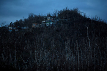 Bare trees are seen at a residential area following Hurricane Maria in Guaynabo