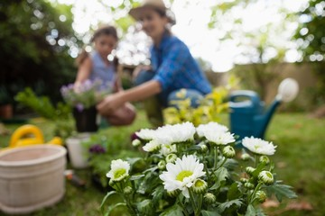 White flowers in pot with mother and daughter in background