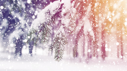 Winter. Christmas background. Snowflakes fall on snow in frosty forest.  Snowy winter morning sunrise