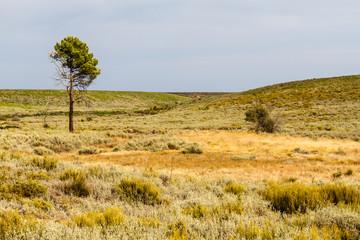 Pino y campo despejado después de un incendio. Tabuyo del Monte, León, España.