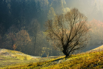 lonely naked tree on hillside. lovely autumn scenery on hazy morning