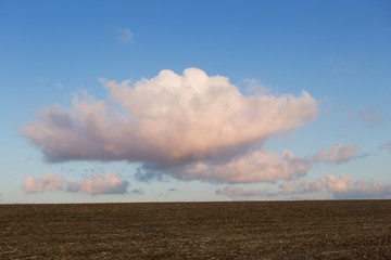 large pink clouds over the yellow field