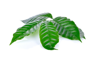 fresh coffee beans leaves on white background