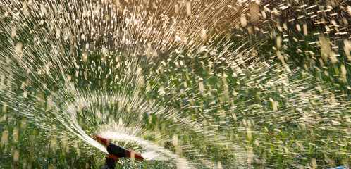 Splashing water from a hose on the lawn