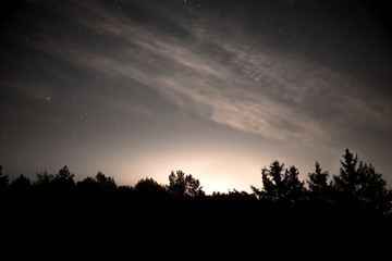 Night sky with stars in the forest at dawn