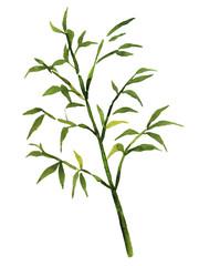 笹の枝 水彩イラスト