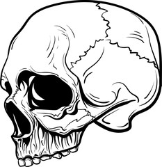 hand drawn anatomy skull . Vector