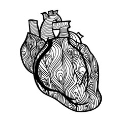Black and white vector of human heart. Hand drawn doodle decorated with waves