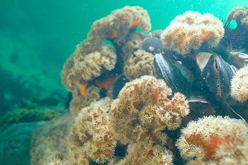 colony of sea anemones under water corals