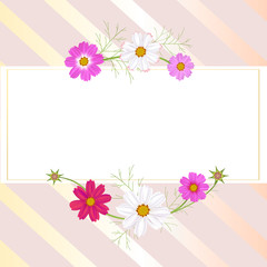 Flowers of cosmos. Beautiful floral illustration. Wild flowers. Frame. Border. White and pink inflorescences. Spring. Summer. Leaves. Petals. Buds.