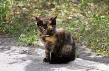 Kitten with tortoiseshell coloring.
