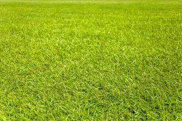 芝生 背景