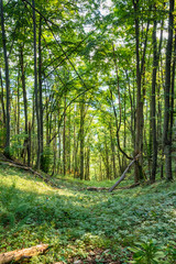 Summer Forest with Beautiful Sunlight