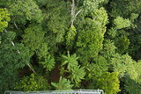 Mamu Rainforest Canopy Walkway in Australien & Mamu Rainforest Canopy Walkway in Australien