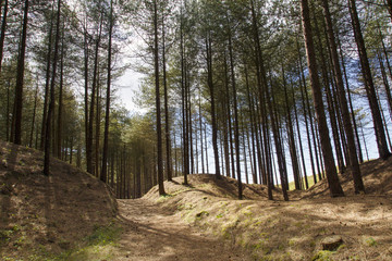 Path through the trees at Cwm Ivy Woods on the North gower coast