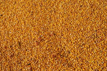 Background of corn