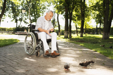 A lonely old man sits in a park on a wheelchair and feeds pigeons