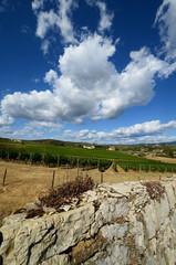 Beautiful Vineyard with blue cloudy sky in chianti region, Tuscany. Italy