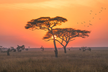 Sunrise in the Serengeti national park,Tanzania