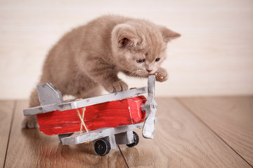 Scottish Fold - Cat is playing with a wooden plane.
