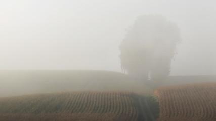 Ländliche Landschaft im Herbst im Nebel