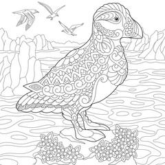 Coloring page of puffin, seabird of northern and Arctic waters. Freehand sketch drawing for adult antistress coloring book in zentangle style.