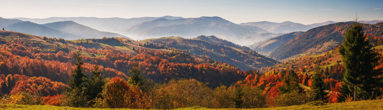 Colorful and bright autumn forest, mountains panorama