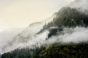Misty fog on top of mountains and tree top for nature landscape background