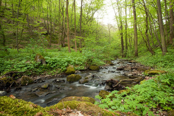 Creek, Czech Republic