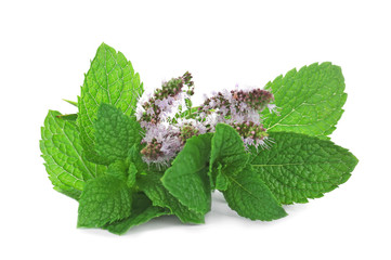 Fresh mint with flowers on white background