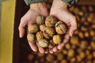 Close-up of woman's hands holding handful of walnuts
