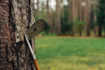Old golf club propped against a tree