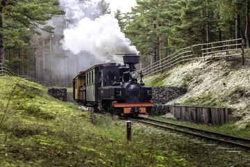 Train on a narrow-gauge railway