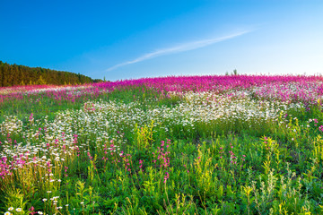 spring  landscape with  flowers on a meadow