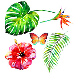 beautiful tropical palm leaves and flowers, watercolor