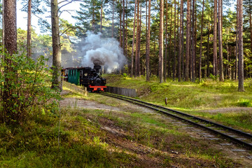 Train on a narrow-gauge railway